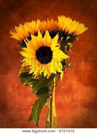 4Sunflowersvertical