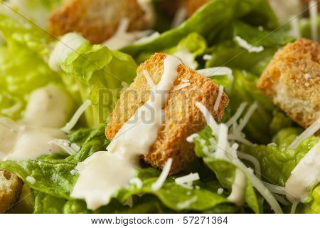 Healthy Green Organic Caesar Salad
