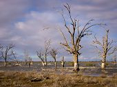 stock photo of semi-arid  - Lake Woolpolool on Calperum Station near Renmark in South Australia - JPG