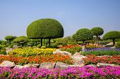 foto of zinnias  - Beautiful decorative garden with many colorful flowers - JPG