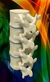 foto of lumbar spine  - Digital illustration of human spine in colour background - JPG