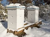 picture of bee keeping  - Bee hives covered by snow in Minnesota - JPG