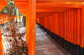 stock photo of inari  - Fushimi Inari Taisha shrine in Kyoto prefecture of Japan - JPG