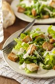 picture of caesar salad  - Healthy Green Organic Caesar Salad with Cheese and Croutons - JPG