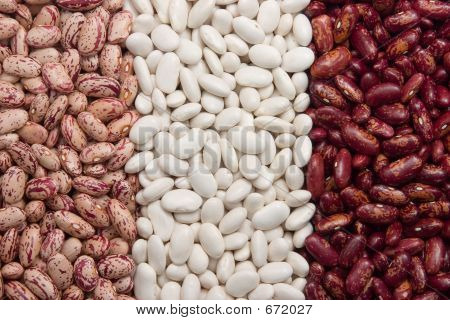 Three Kinds Of Kidney Beans