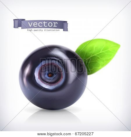 Blueberry, vector illustration