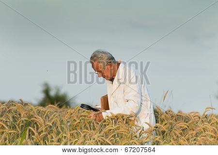 Agronomist In Wheat Field