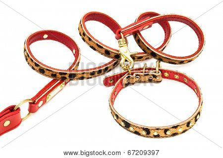 beautiful leash and collar on a white background