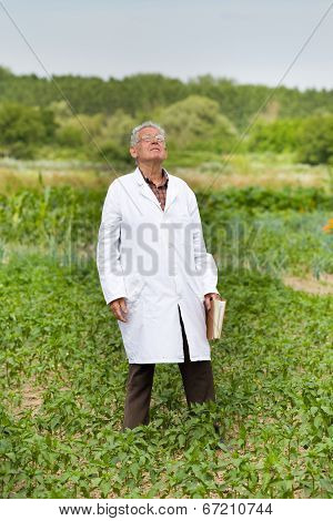 Agronomist In Vegetable Garden