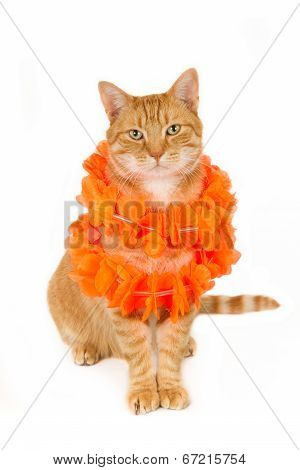 Ginger cat with orange boa