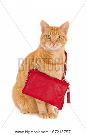 Ginger cat with handbag