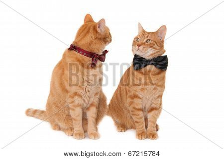 Ginger cats with tie bows