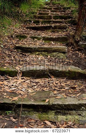 Steps in the Bush