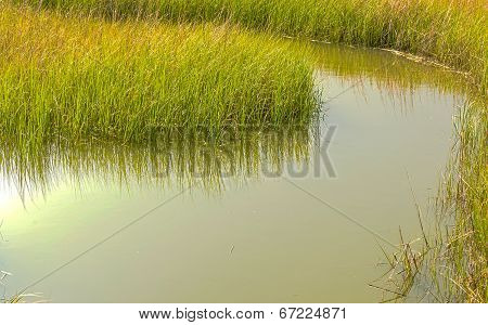 Creek Through the Marsh