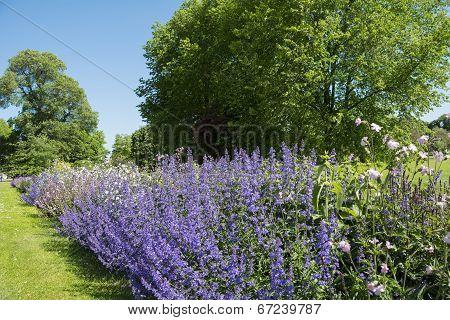 Summer parkland