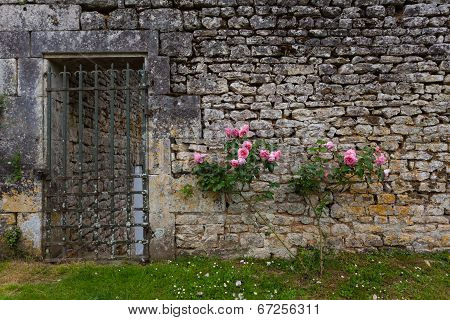 Rose Bush And Stoned Wall