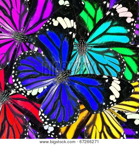 Blue And Mix Of Many Colorful Butterflies In To Great Background Patterns
