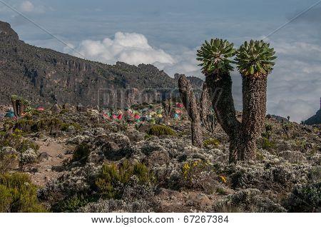The Campsite, Barranco, Kilimanjaro