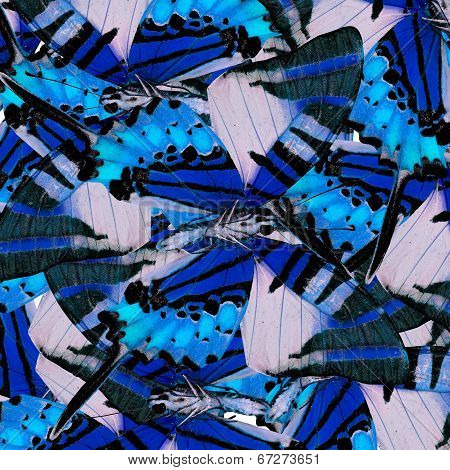 Mix Of Many Beautiful Blue Butterflis In The Same Frame As A Nice Messy Background Texture