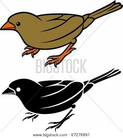 sparrow - small bird