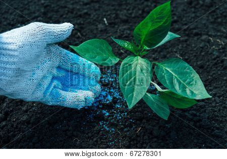Green Plant On Soil