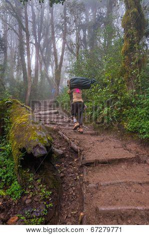 Porter Heading Up The Trail On Kilimanjaro