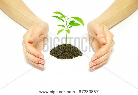 Hands holding sapling in coins on white