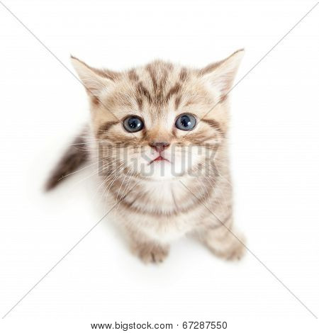 Top View Of Baby Cat Kitten Isolated On White Background