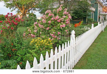 Rose Picket Fence