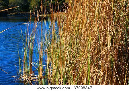 Lake with Tallgrass
