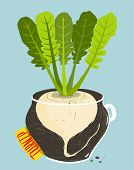 picture of rutabaga  - Root vegetable container gardening illustration - JPG