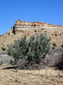 picture of xeriscape  - big sage near desert bluff - JPG