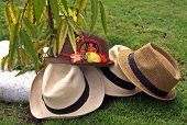 stock photo of panama hat  - A collection of fedora and panama hats in a tropical place - JPG