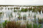 foto of boggy  - Swampy area with grass and sedge  - JPG