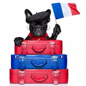 stock photo of french beret  - french bulldog waving flag of france with luggage - JPG
