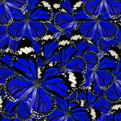 stock photo of common  - Blue Background Texture made of Common Tiger Butterflies in fancy color and patterns - JPG