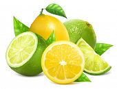 stock photo of lime  - Vector illustration - JPG