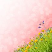 picture of garden eden  - Field of flowers and grass floral background - JPG