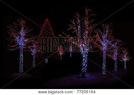 Illuminated Trees At Night