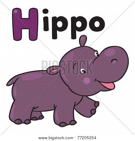 Little funny hippo, for ABC. Alphabet H