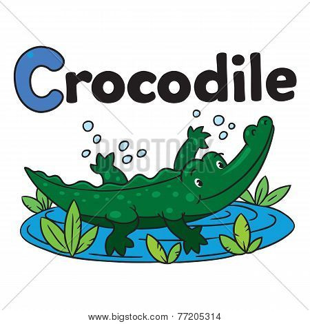Little crocodile or crocodile, for ABC. Alphabet C