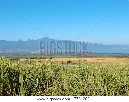 Maui Landscape View Of Sugarcane Crops, Mountains, Coast, And Ocean In Kahului, Maui, Hawaii