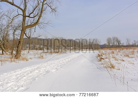 Serene Path In The Winter