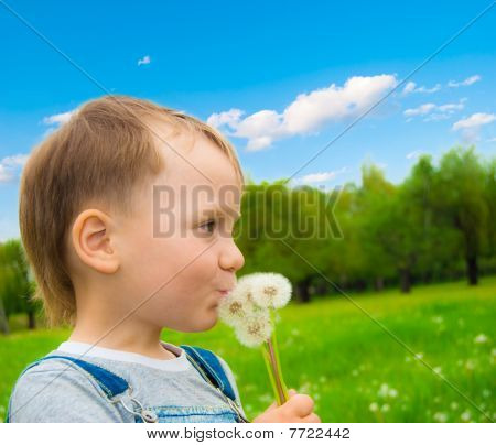 The Boy With A Dandelions