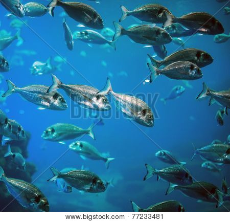Plenty Of Fish In The Depths Of The Sea
