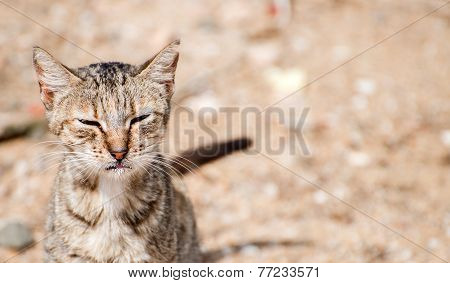 Portrait Of Dirty Stray Feral Cat Outdoors