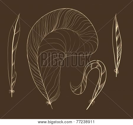 Vector Seamless Pattern Of Plumage