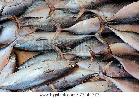 A catch of fishes on a fish market, Zanzibar island