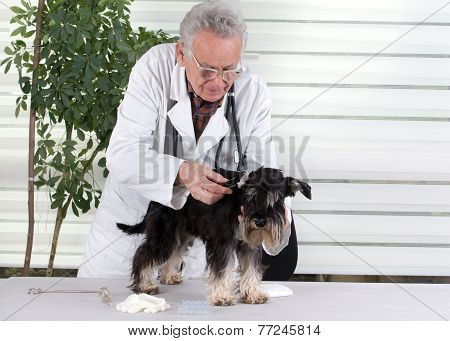 Dog Ear Examination