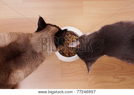 cats with feeding bowl